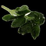 Longos Fresh Herbs Organic Basil