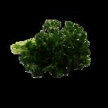 Longos Organic Fresh Curley Parsley
