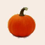 Mini Pie Pumpkin