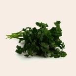 Cilantro Organic
